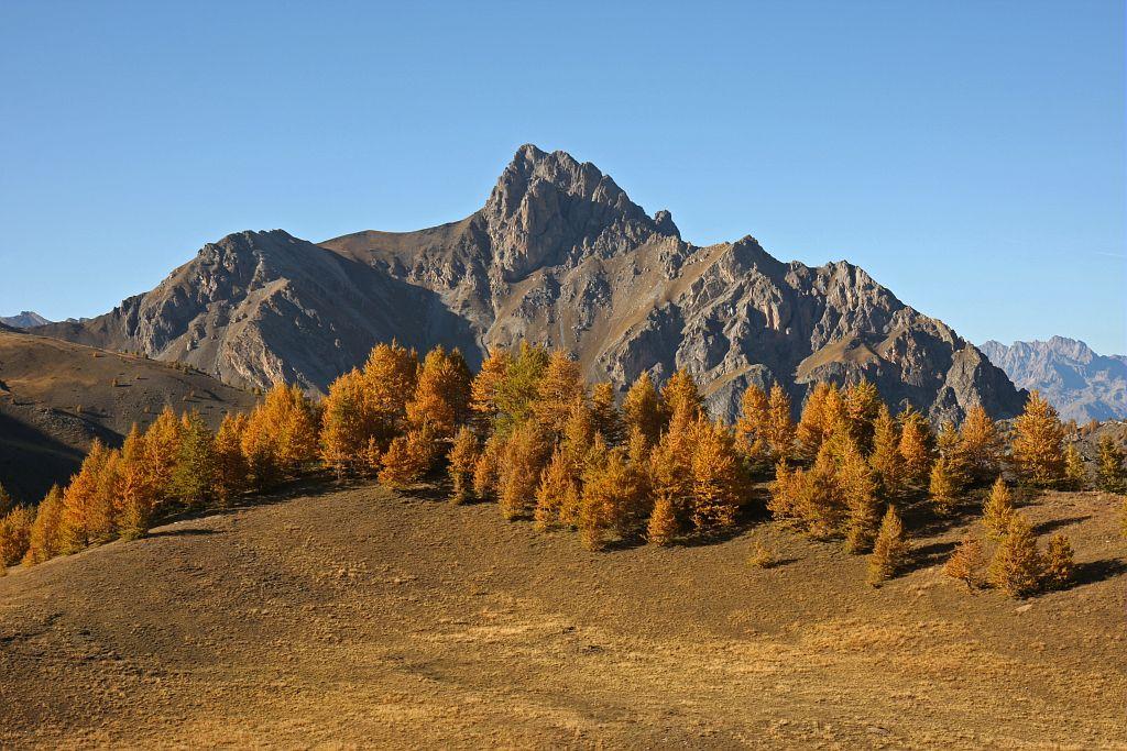 Paysage d'automne : mélézin vu de l'alpe de Réotier © Damien Combrisson - Parc national des Ecrins