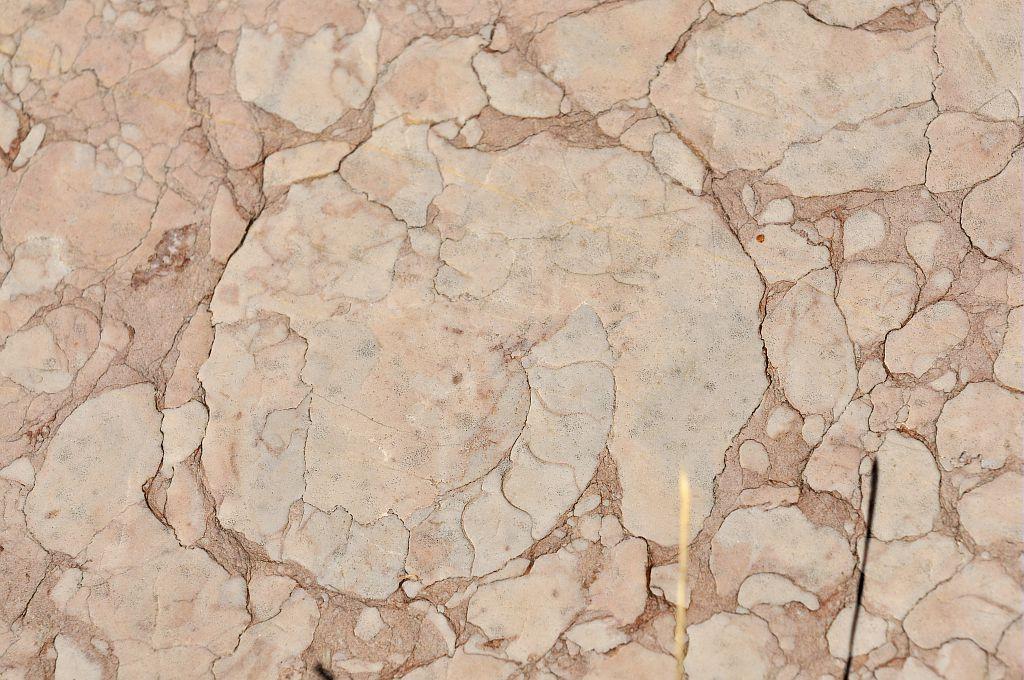 Oucanes de Chabrières - ammonites - Réallon © Mireille Coulon - Parc national des Ecrins