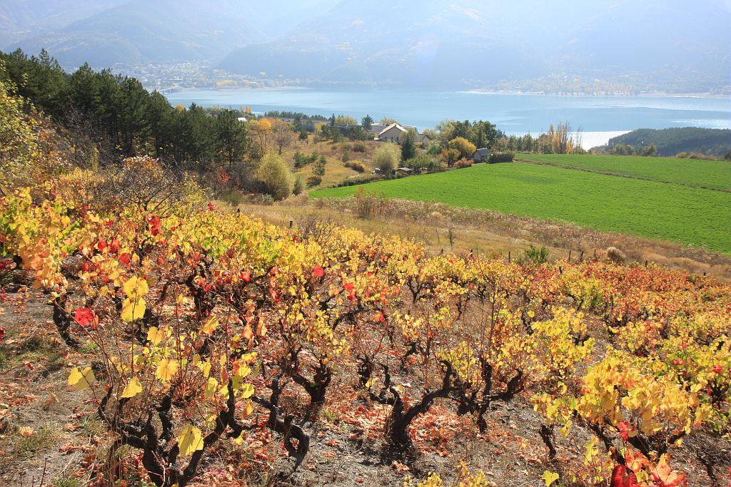 Vignes en Embrunais © Michel Bouche, Parc national des Ecrins