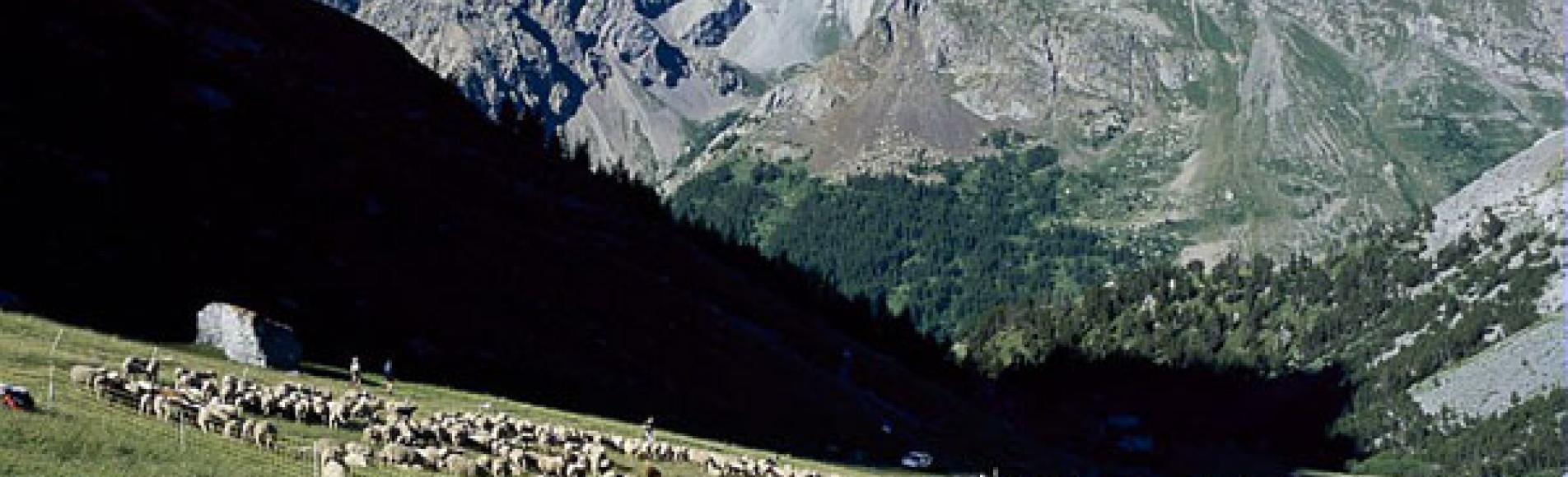 L'alpage de la Ponsonnière à L'Alpe du Lauzet (commune du Monêtier-les-Bains)