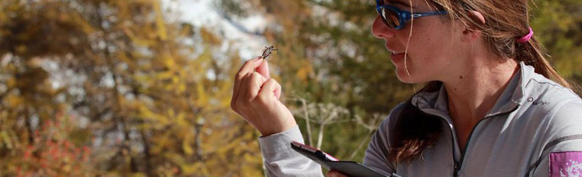 Détermination d'orthoptères - © C.Albert - Parc national des Écrins