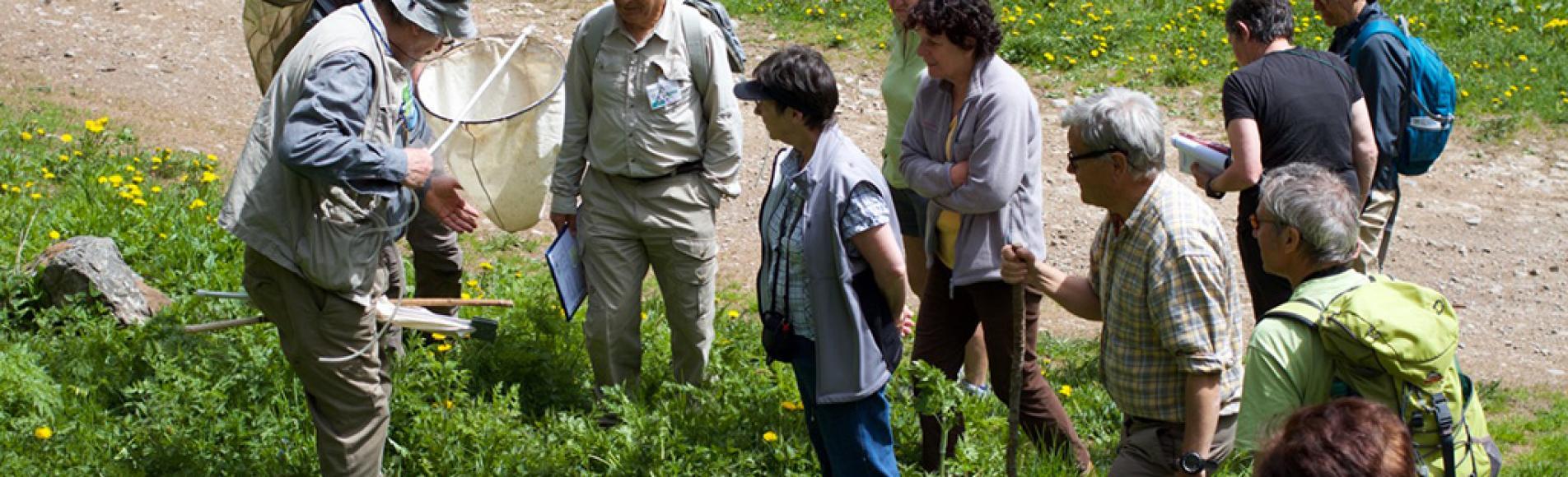 entomologie - embrun - evenement biodiversité 2016 - Parc national des Écrins