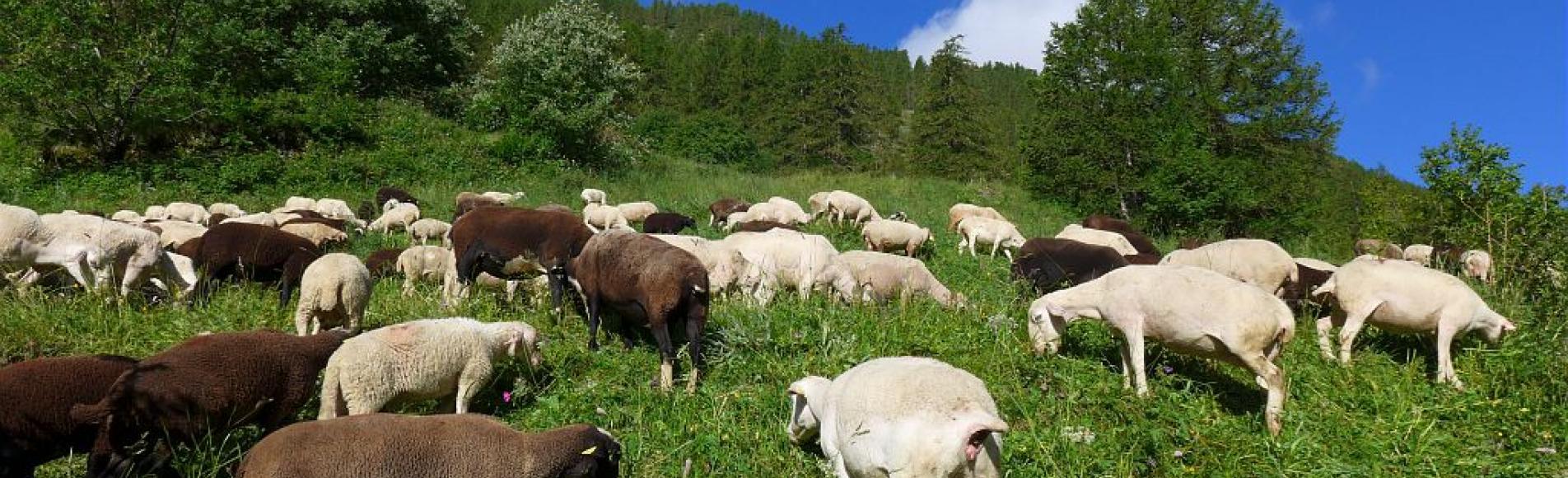 Alpage © JP Telmon - Parc national des Ecrins