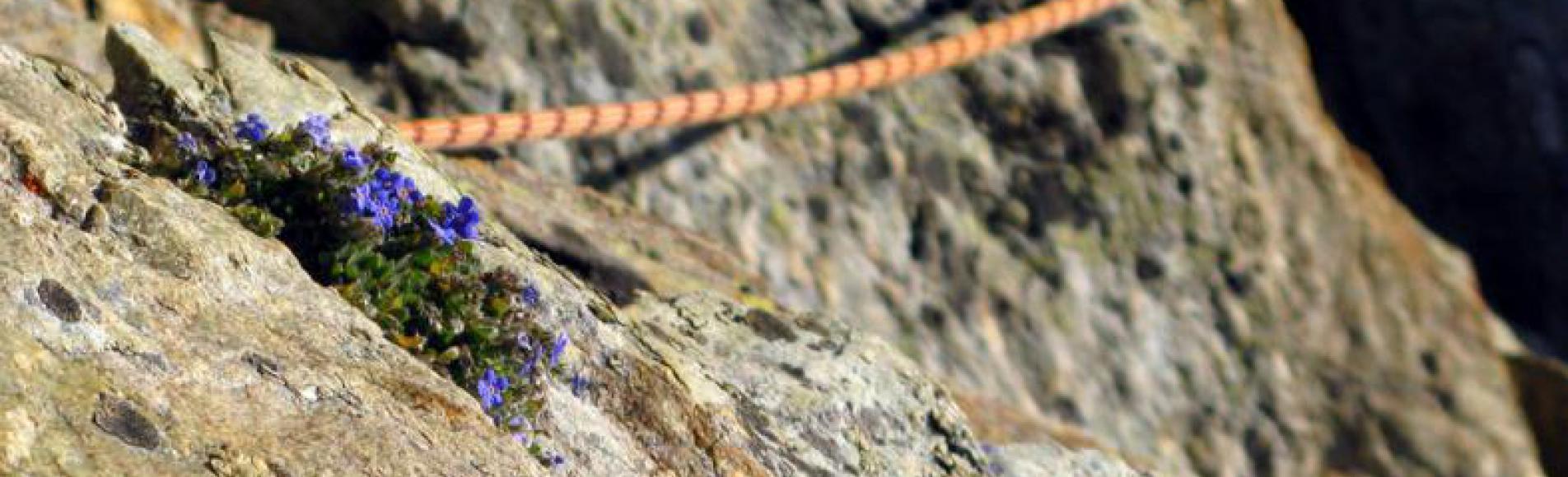 Corde et flore d'altitude - © S.Ibanez - Ecologie verticale - LECA-PNE