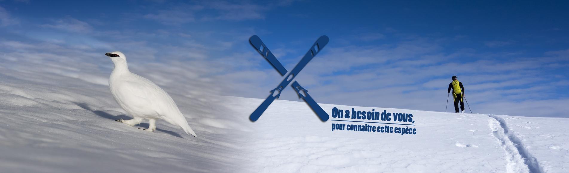 randonnée à ski  © T.Maillet - Lagopède © R.Chevalier - Parc national des Écrins