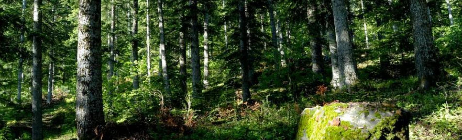 Sous-bois de Boscodon © M.Coulon - Parc national des Écrins