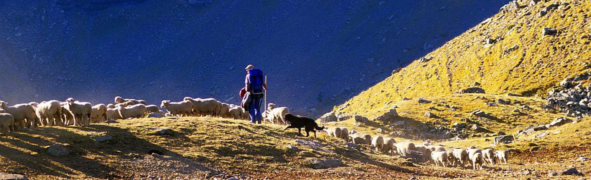 pastoralisme faravel -photo R.Chevalier - Parc national des Ecrins