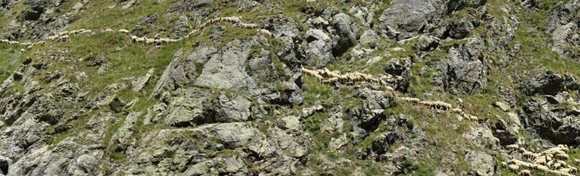 Troupeau à Valestreche - photo M.Corail - Parc national des Ecrins