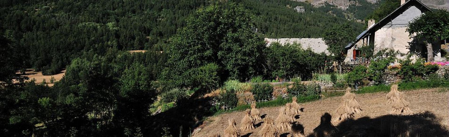 Blé en gerbes (butchis) Les Anges - Réallon ©Coulon Mireille - Parc national des Ecrins