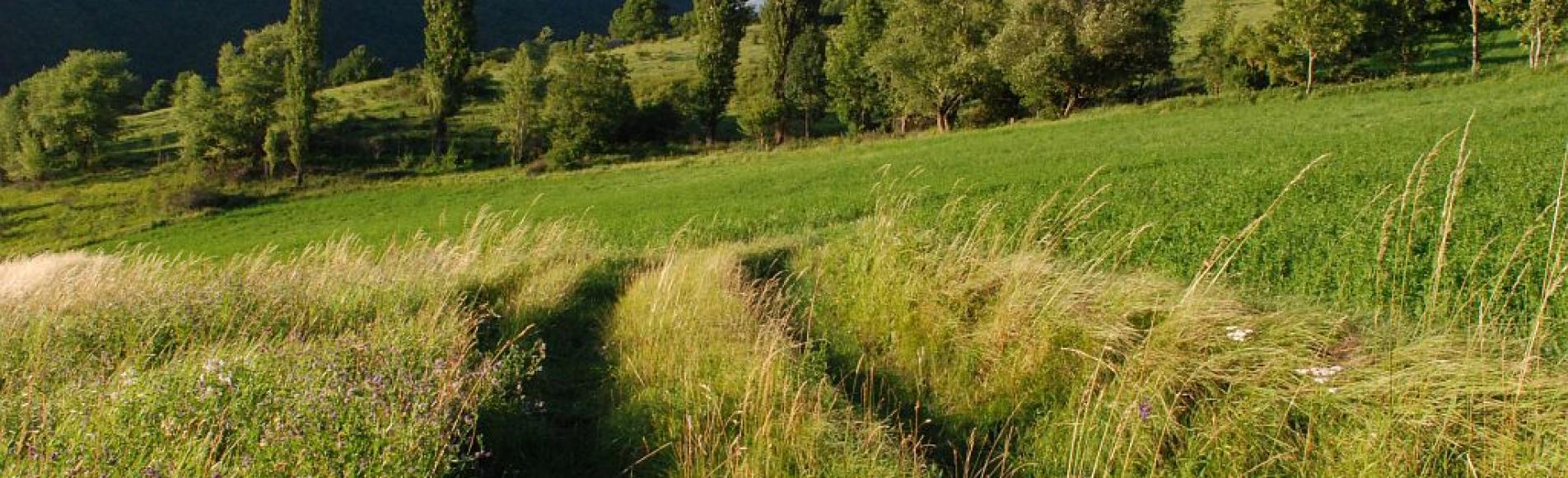 Champ près du village des Reculas ©Dominique Vincent - Parc national des Ecrins