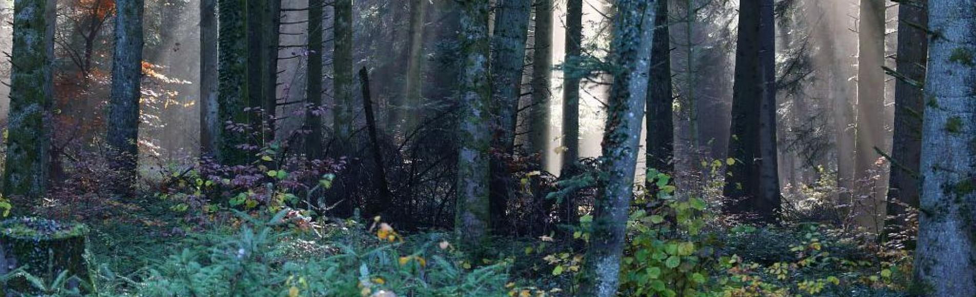 Forêt de Détain et Bruant ©MarcCorail