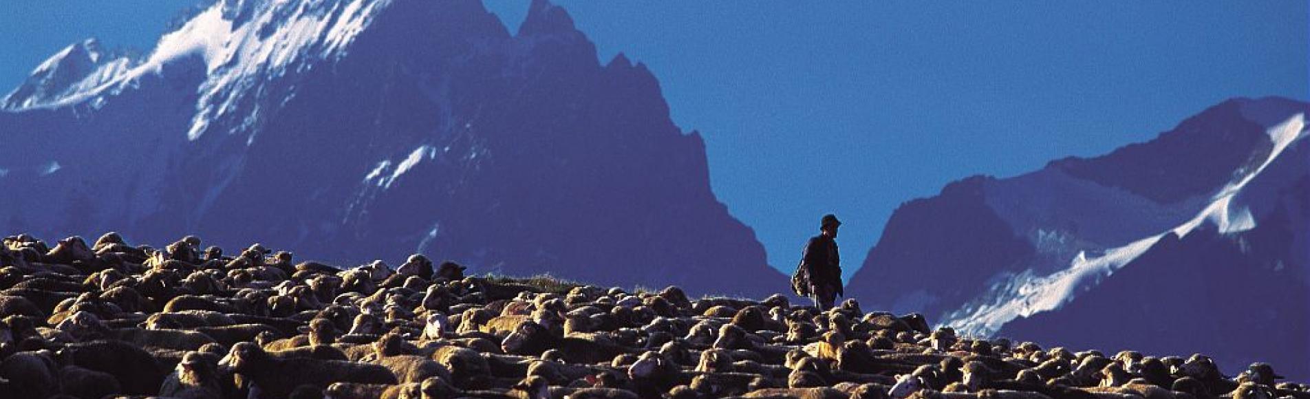 Pastoralisme sur le plateau d'Emparis ©Bodin Bertrand