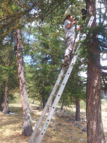 Contrôle endoscopique des gîtes à chiroptères  © M.Corail - Parc national des Ecrins