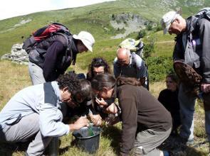 Formation insectes - alpages sentinelles © B Delenatte - Parc national des Écrins