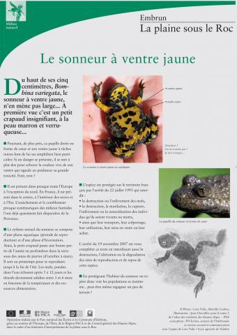 Panneau sur le sonneur à ventre jaune - plaine de Roc - PNE Embrun
