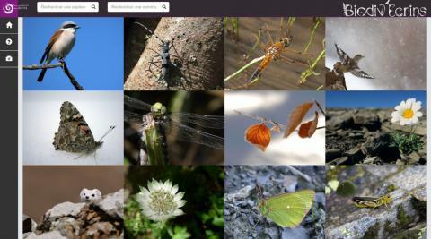 Atlas biodiv-Ecrins - flore et faune du Parc national des Écrins