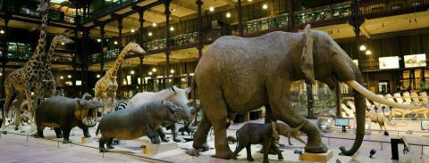 Grande galerie © Muséum national d'Histoire naturelle (MNHN) à Paris