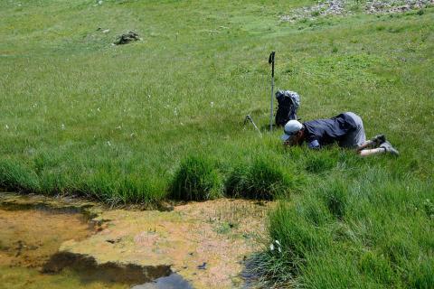 Prospection malacologie - © MCoulon - Parc national des Ecrins