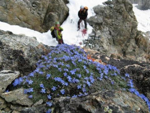 Ecologie verticale - S.Ibanez - LECA - PNE