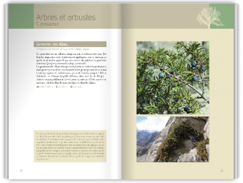 Flora verticalis - Cédric Dentant - Le naturographe Editions 2017