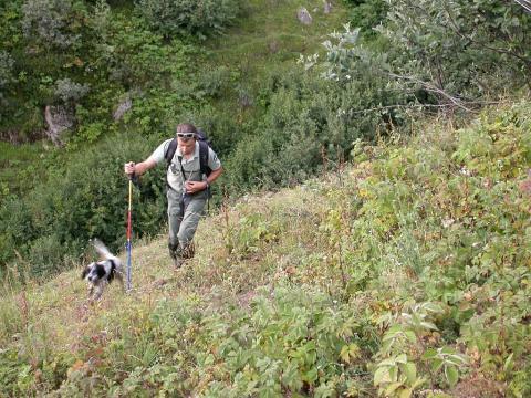 Comptage au chien 2005 - La lavine - Valgaudemar © JP Telmon - Parc national des Écrins