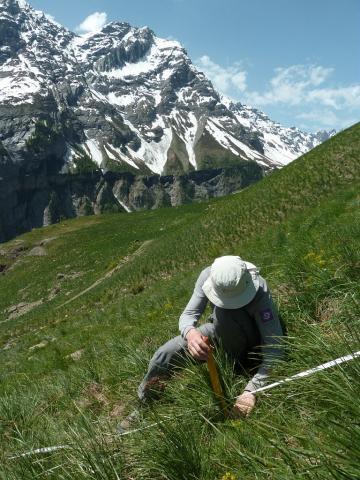 Protocole ressources en herbe © Parc national des Écrins