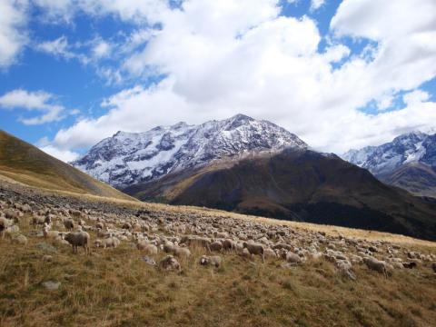 Les éleveurs et bergers devront faire face à des aléas climatiques de plus en plus extrêmes sur les alpages © Edith Debray