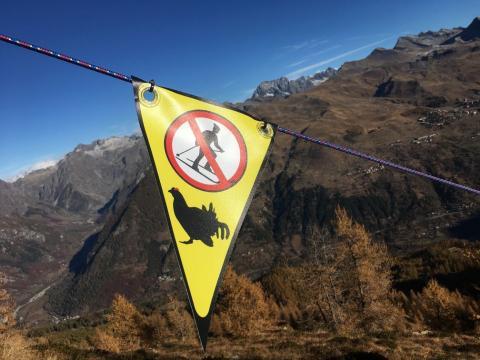 panneau de signalisation protection tétras lyre - Orcières 2017