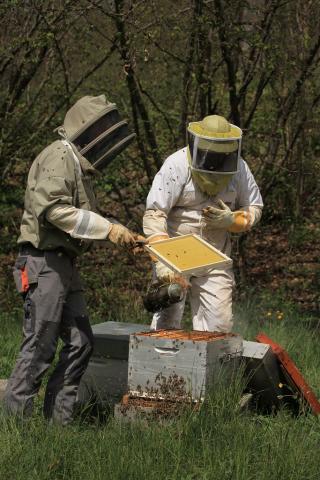 apiculture dans les Ecrins - © M.Corail - Parc national des Ecrins