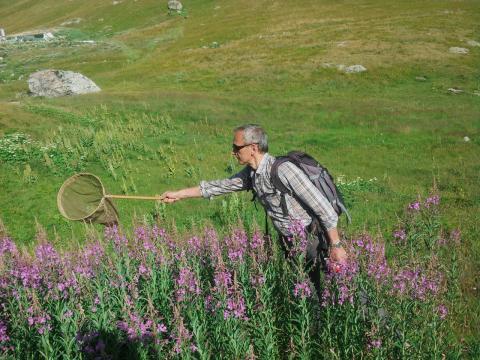 Prospection col de Sarenne - séminaire Bourdons alpins -juillet 2018 - ©  Manon Whittaker -Parc national des Écrins