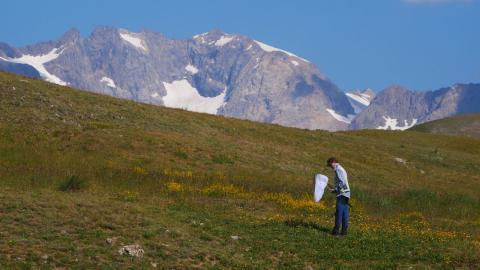 séminaire Bourdons alpins - juillet 2018 © D.Combrisson - Parc national des Écrins