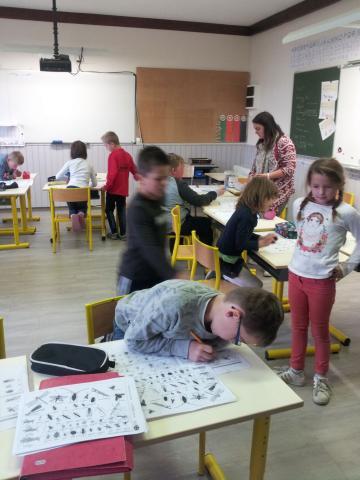 Clefs de déterminatiuon, insectes à l'école de Chaillol © Emmanuel Evin, PNE