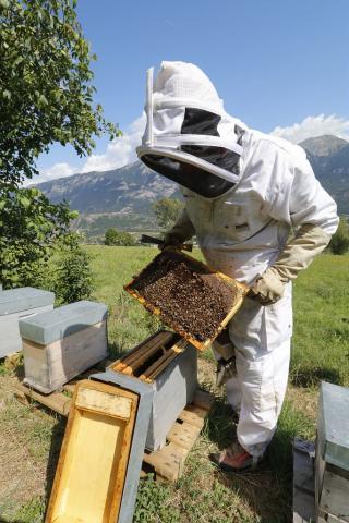 Jean-Jacques Daubert, apiculteur à Châteauroux-les-Alpes, ambassadeur de la marque esprit parc national dans les Ecrins depuis sa création. © M.Bouvier-Parc national des Écrins
