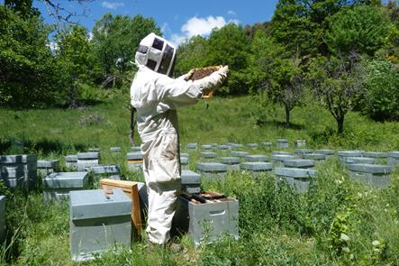JJ Daubert dans son rucher - © P. Navizet - Parc national des Ecrins