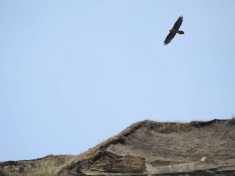 dans le secteur du nid des gypaètes © Nils Paulet - Parc national des Écrins