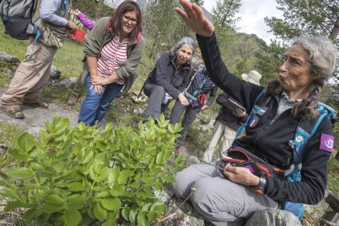 Sortie botanique avec Marie, du Parc national et l'association Bérardie - Ecrins de nature 2019 en Vallouise - © P.Saulay-Parc national des Ecrins
