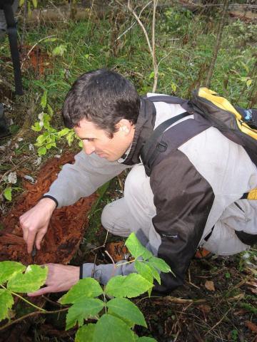 Etude par piégeage des insectes saproxiliques - réserve lauvitel - © D.FIAT - Parc national des Écrins