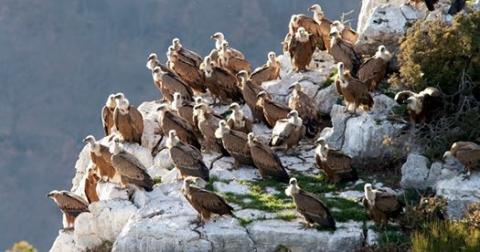 photo Envergures alpines