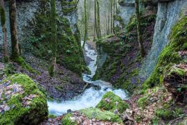 Parc national des forêts -- photo Franck Fouquet