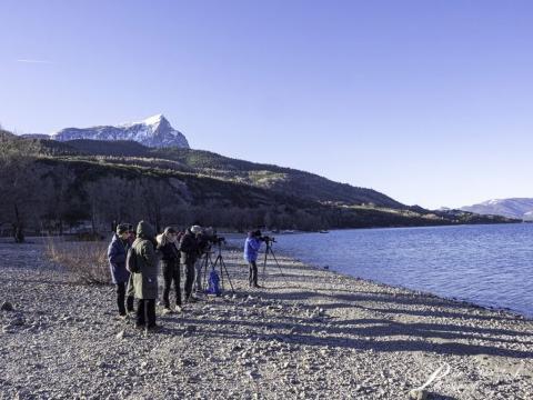 Comptage wetlands interational à serre ponçon - 2020 - photo JP Coulomb