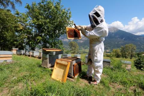 Jean Jacques Daubert dans son rucher © M. Bouvier - Parc national des Écrins