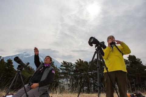 comptage aigle royal embrunais - photo P.Saulay - Parc national des Ecirns