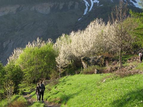 Printemps Dormillouse - photo T.Maillet - Parc national des Ecrins
