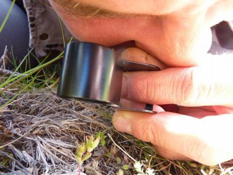 Identification à la loupe - photo C.Coursier - Parc national des Ecrins