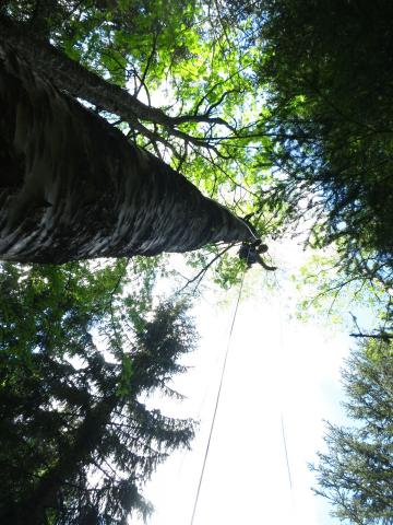 Pieges en canopée - photo Parc national des Ecrins - printemps 2020