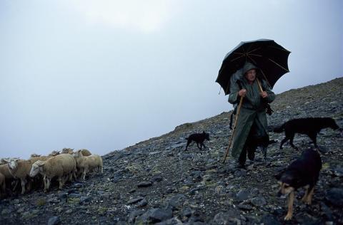 Berger et troupeau au passage du Neyrard - photo JP Nicollet - Parc national des Ecrins