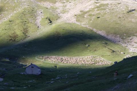 Troupeau regroupé au Lautaret - photo C.Coursier - Parc national des Ecrins