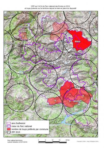 Zones de présence permanente du loup dans le Parc national des Ecrins en 2019