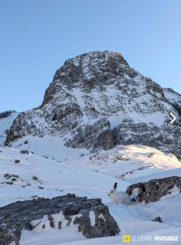 Le blanchon est parfaitement adapté pour survivre en haute montagne / © Olivier Born