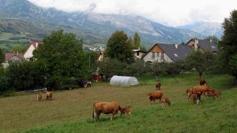 Les Eyrauds - commune de Chabottes - © Marc Corail - Parc national des Écrins